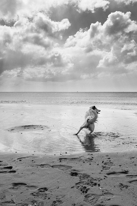 ©Neil Turner, April 2013. Alum Chine, Bournemouth.