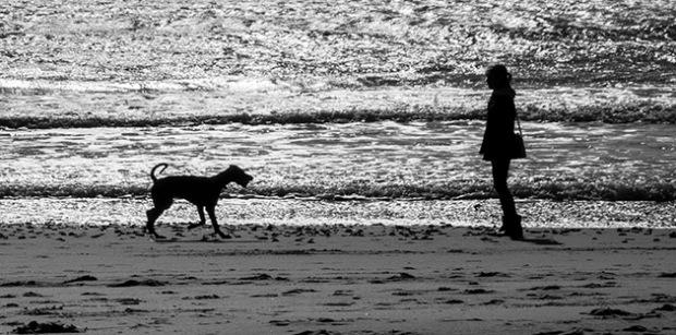 ©Neil Turner, October 2013. Bournemouth