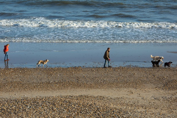 People exercising their dogs on the 'dog-friendly' beach at Fisherman's Walk as the sun begins to set.  © Neil Turner